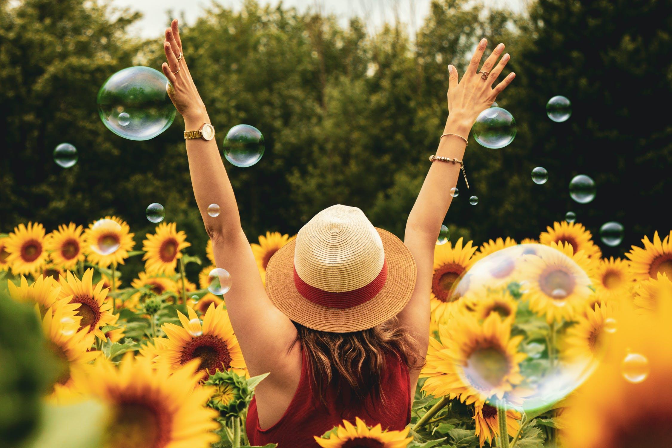léto - slunečnice