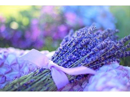 květ levandule2