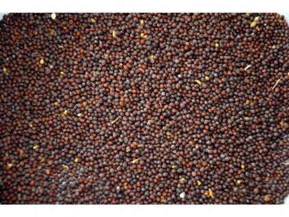 Hořčičné semínko hnědé sareptská hořčice