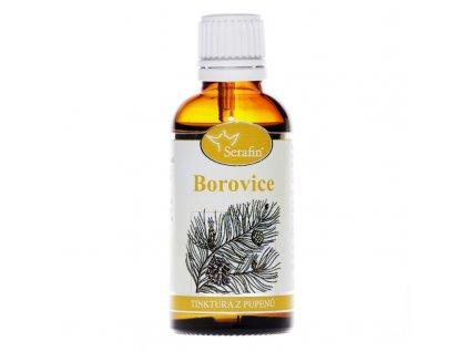 borovice1