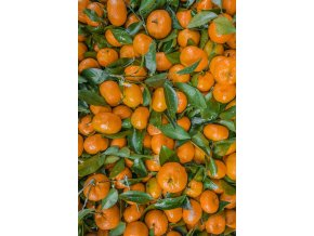 citron1 (2)