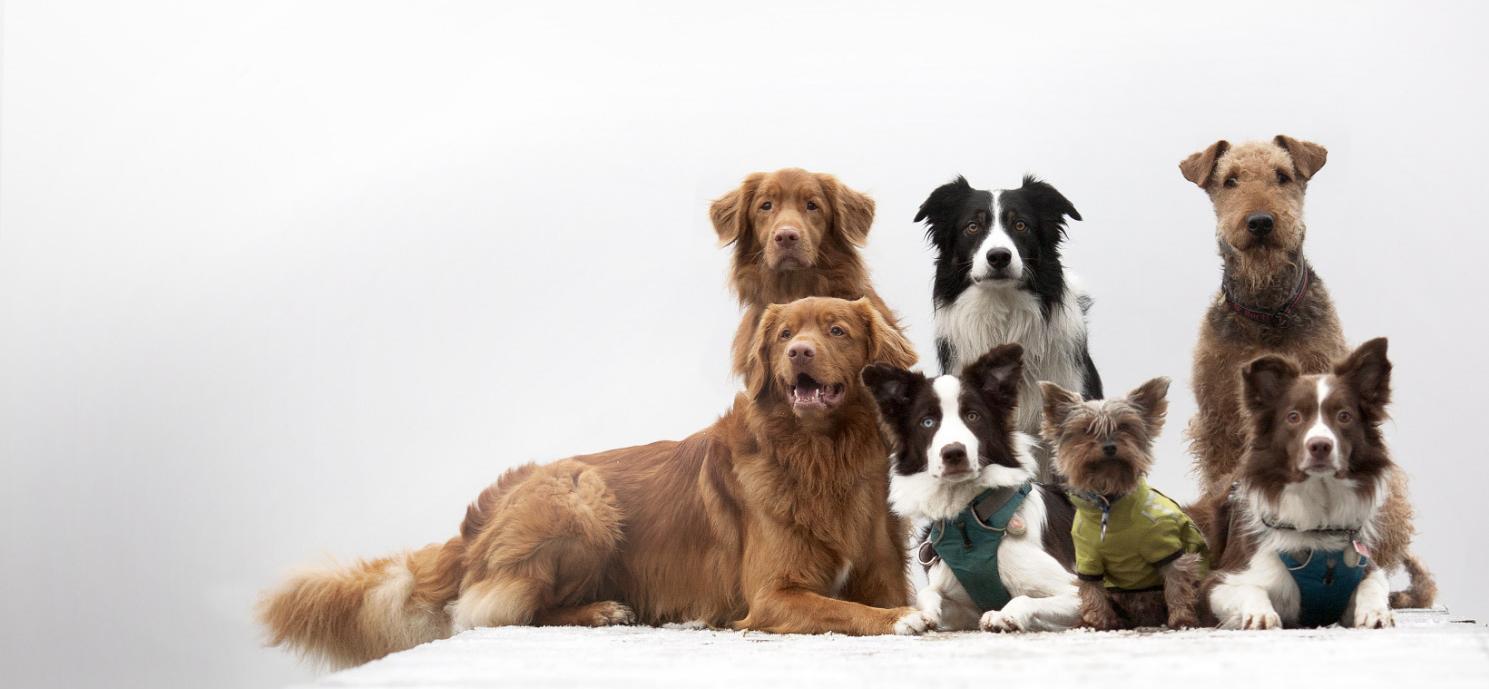 Váš spokojený pes  je naše poslání