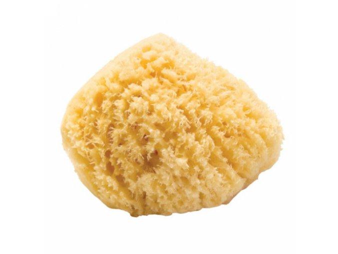 Förster´s prírodná morská hubka na umývanie - Karibská - S