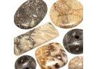 Fossil korál