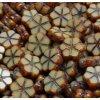 Ploškované korálky - malé kytičky - přírodní