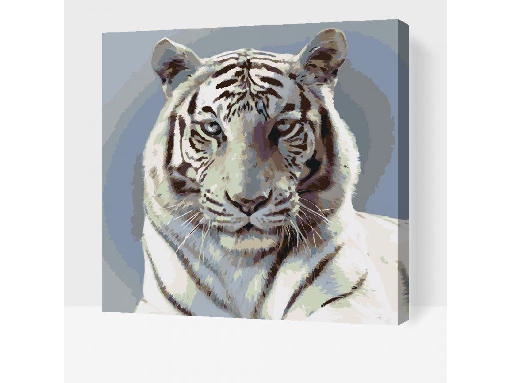 Tiger malen nach zahlen