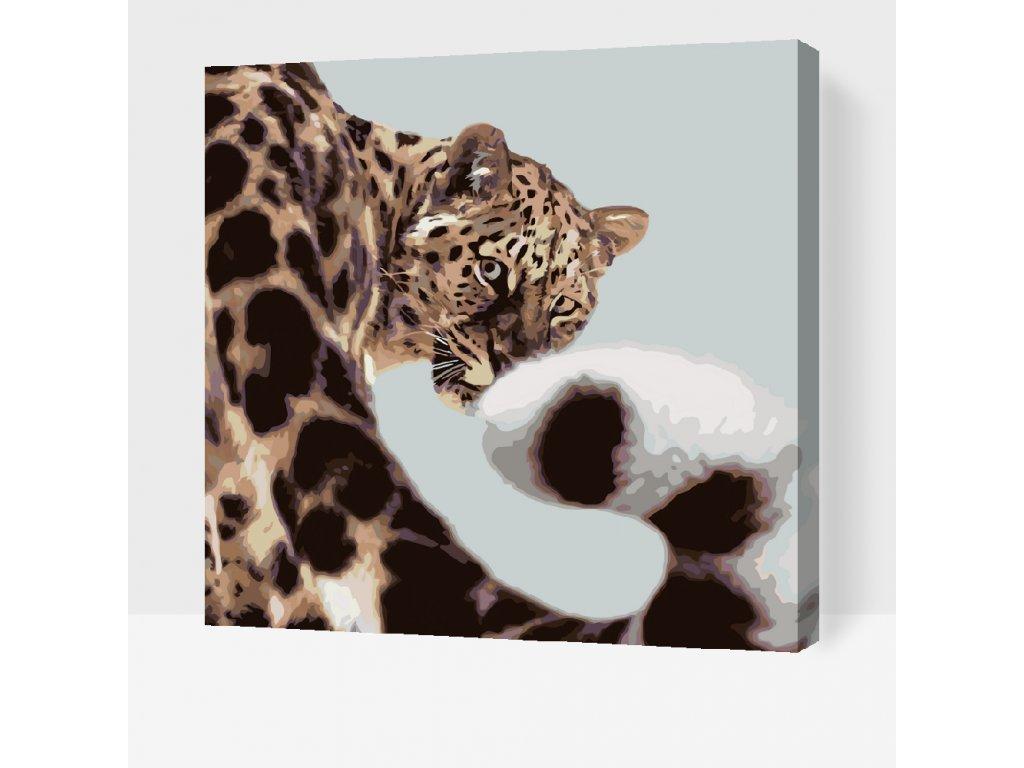 Malen nach Zahlen - Leopard