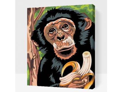 Malen nach Zahlen - Affe mit Banane (Größe 40x50cm, Rahmen ohne Rahmen (nur Leinwand))