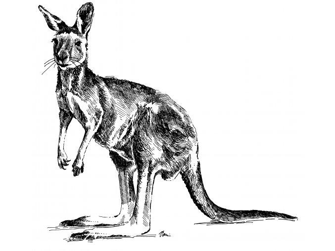 BILTONG   KLOKANÍ   ORIGINAL   50g (AUS - AUSTRALIA)