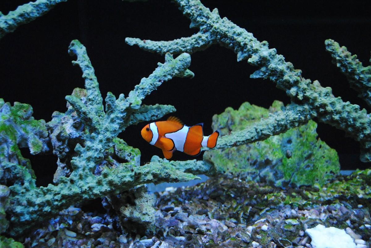 Akvarium morske
