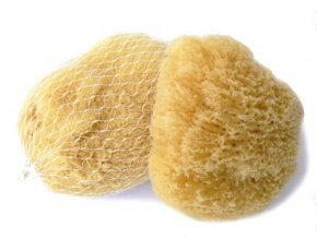 Karibská morská huba 7 - 9 cm