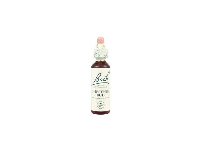 CHESTNUT BUD - Pagaštan konský (Objem 20 ml)