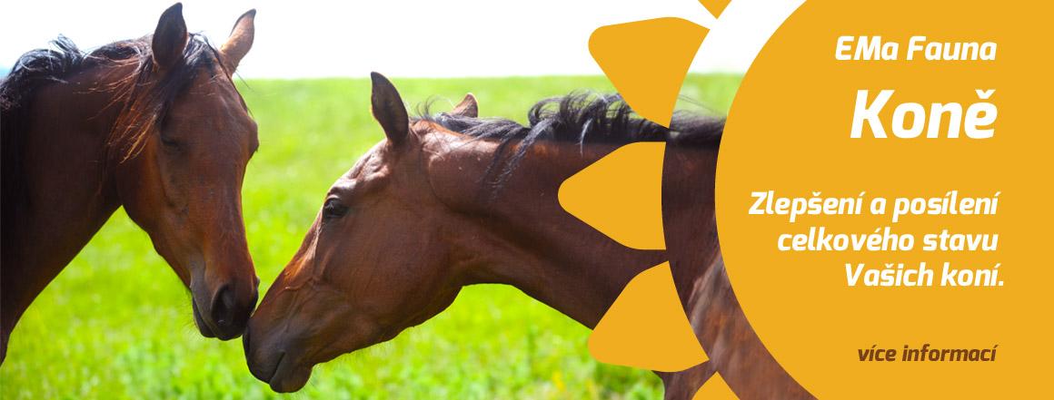 EMa Fauna Koně