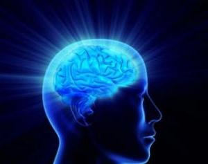 výživa pre mozog