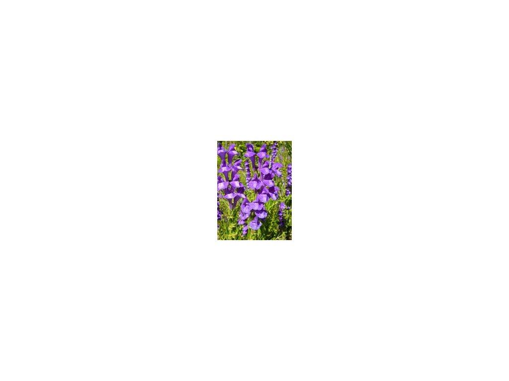 Šišiak bajkalský bio výťažok 100 ml