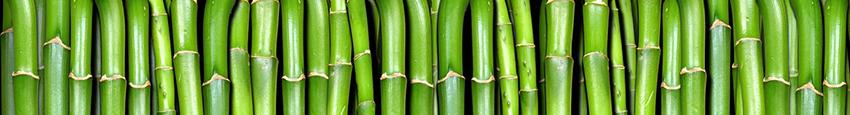 bambusovy.strom_1