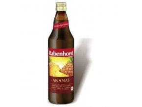 ananas rabenhorst