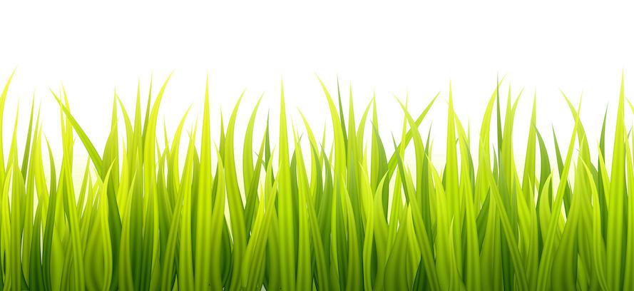 Trava bio potraviny