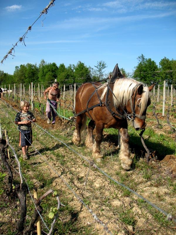 víno bez siřičitanů a biodynamické víno