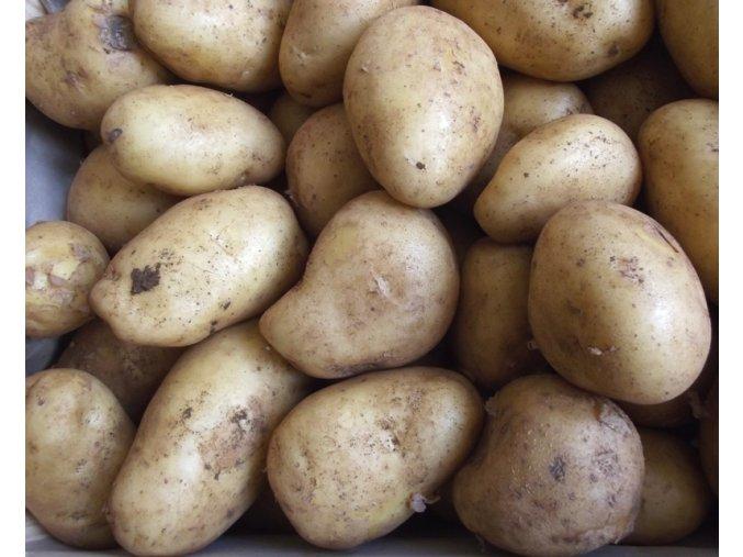 Bio brambory nové