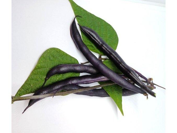 BIO fazolové lusky (fialové)