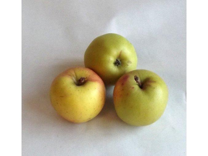BIO jablka Golden