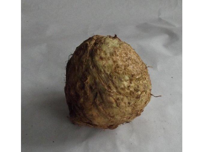 celer bulva
