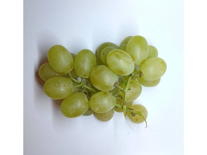 BIO víno hroznové modré