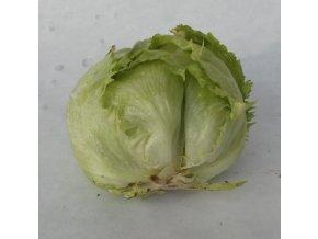 BIO salát ledový