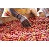 David Namoso, foto: The Coffee Gardens