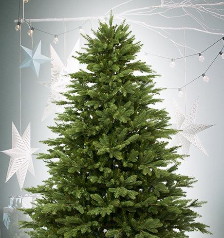 Vianočné stromčeky BAZÁR