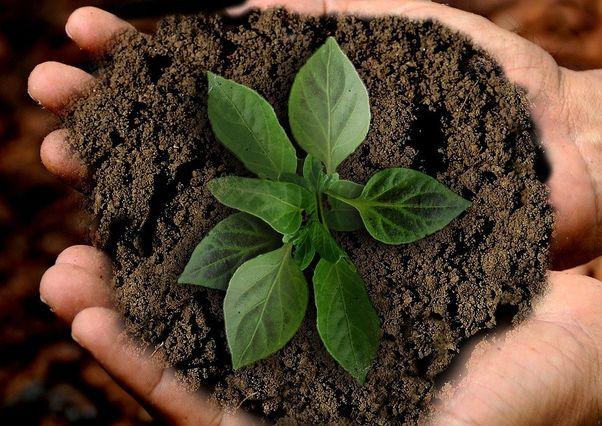 7 eko tipů na využití kávové sedliny