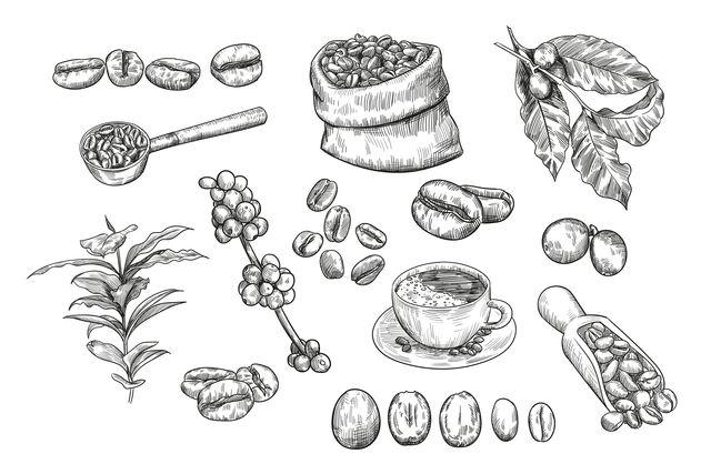 Arabica a robusta. Objevte 7 rozdílů