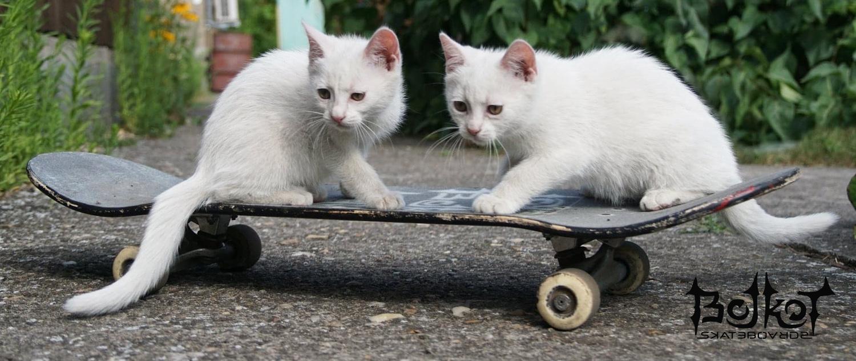 Bojkot skateboards
