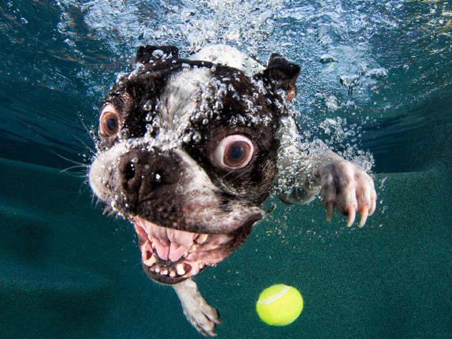 Jak nejlépe zchladit psa ve vedrech?