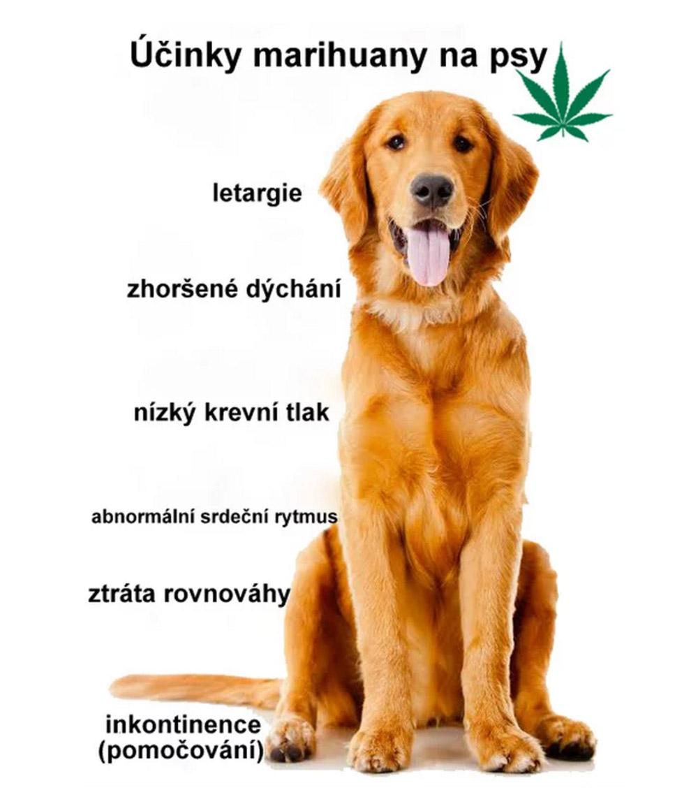 novinka05_1