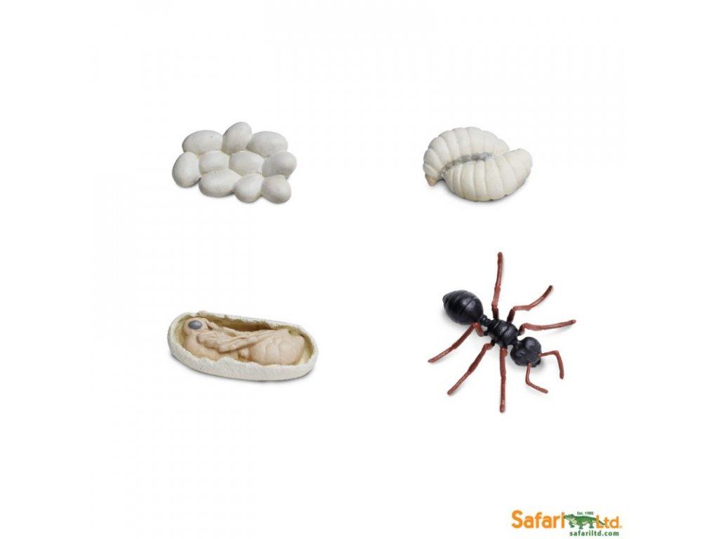 Životní cyklus Mravenec 2