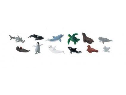 Tuba mláďata mořských živočichů 3