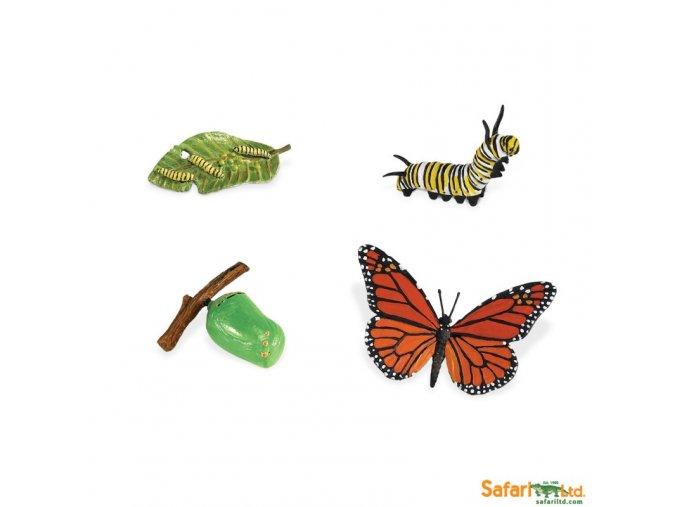 Životní cyklus Motýl 2