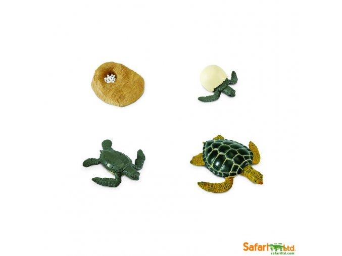 Životní cyklus Mořská želva 1