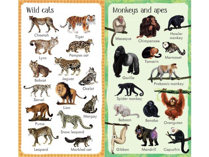 199 ZOO Animals