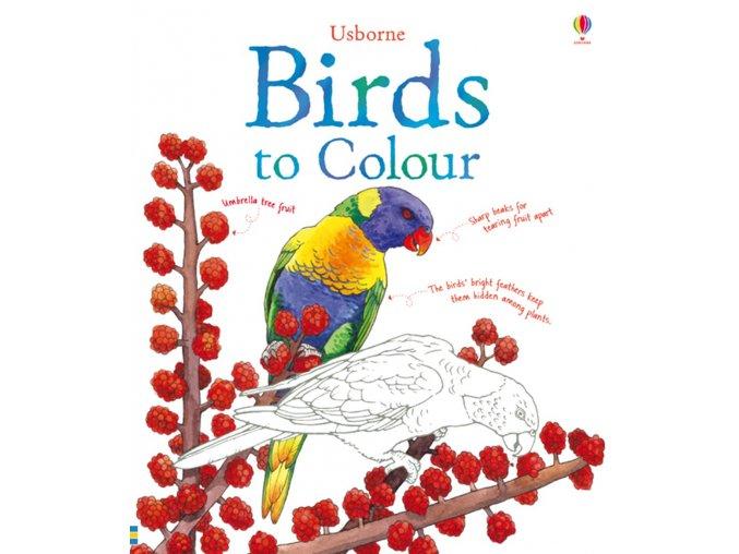 Birds to Colour 1