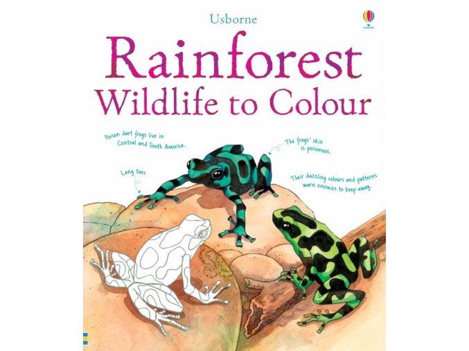 Rainforest wildlife to colour 1