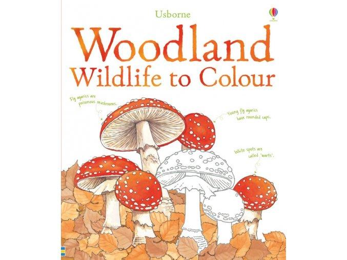 Woodland Wildlife to Colour