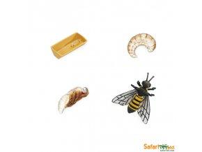 Životní cyklus Včela 1
