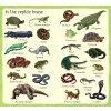 199 ZOO Animals F2
