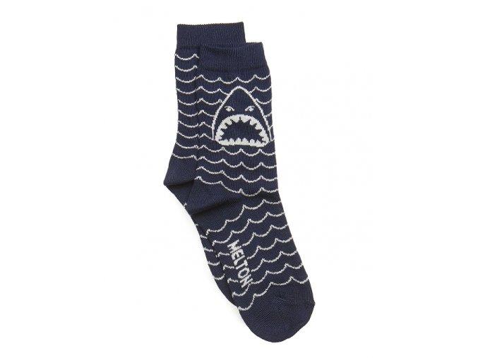 shark marine1