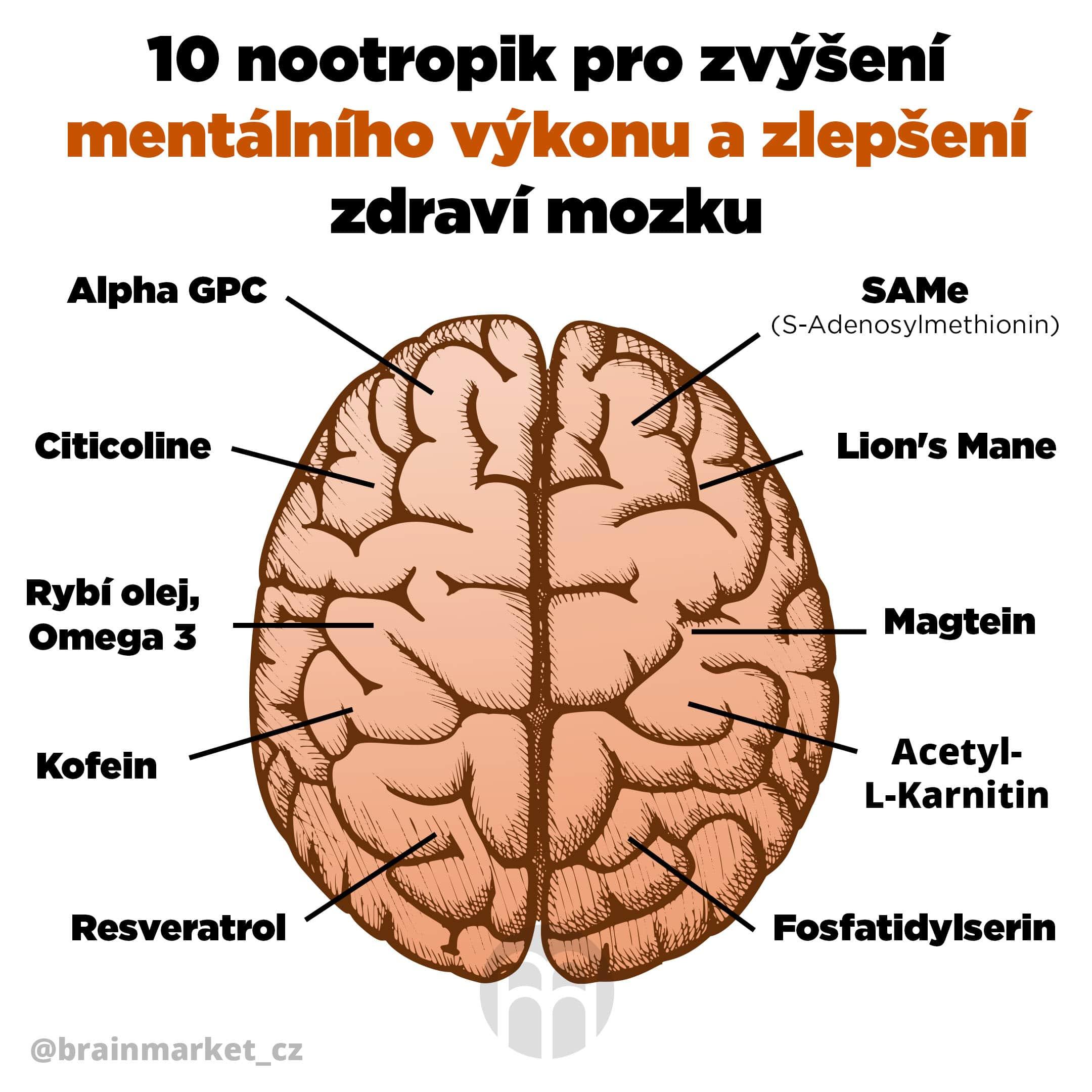10 nootropik pro zvýšení mentálního výkonu a zlepšení zdraví mozku