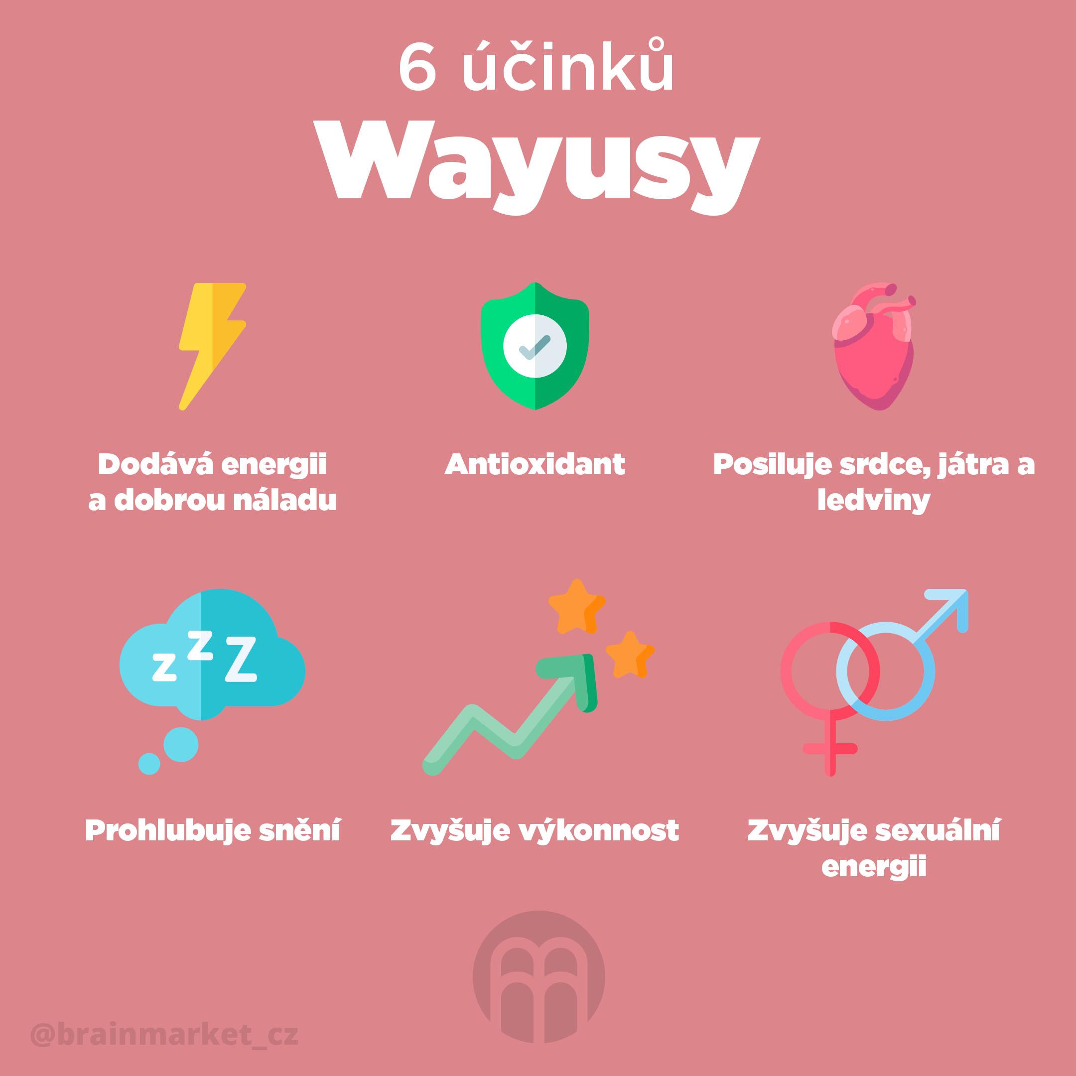 Wayusa, silnější sestra Yerby Maté