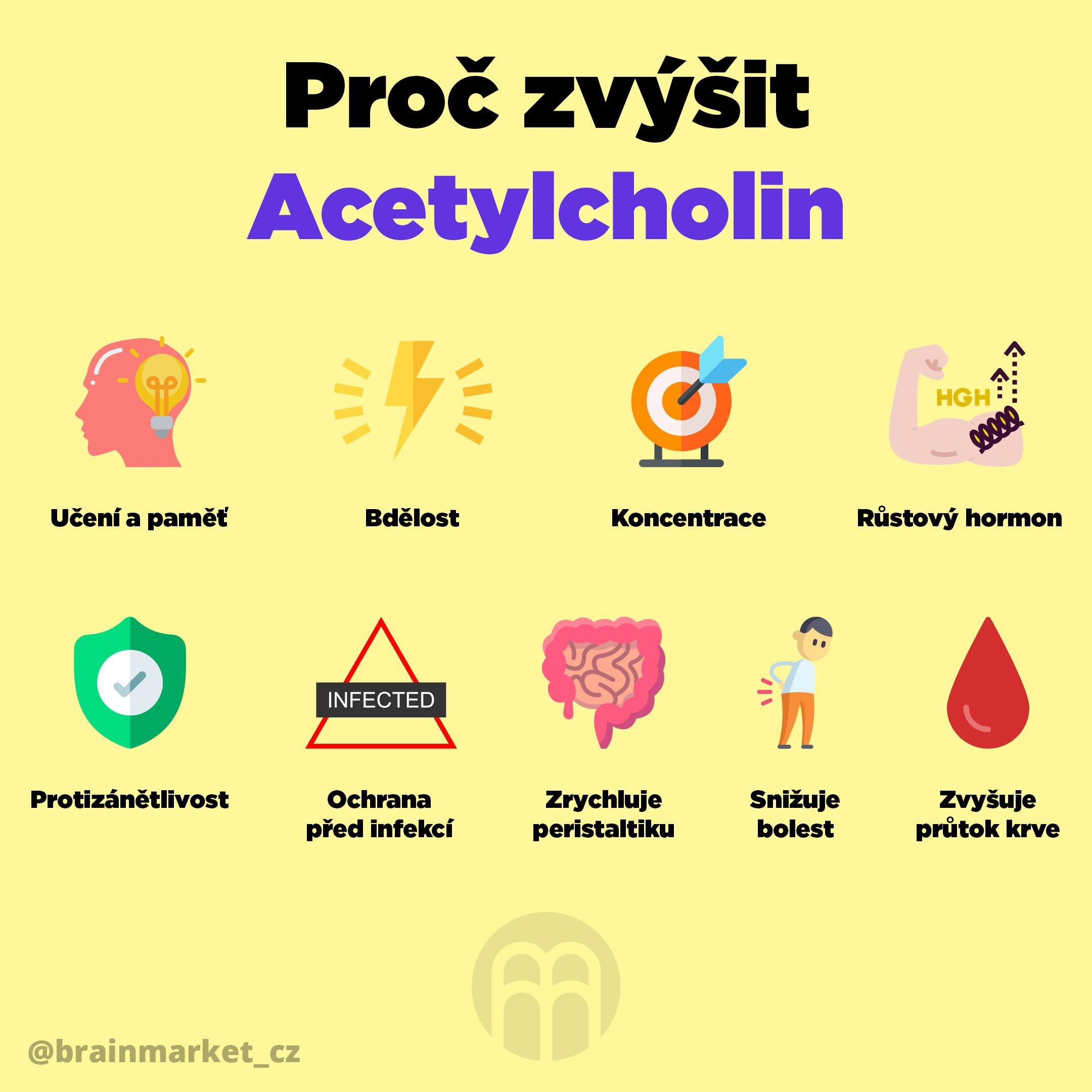K čemu je acetylcholin? A 9 důvodů proč ho zvýšit!